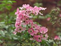 kwiat_690