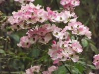 kwiat_691