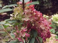 kwiat_692