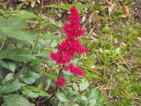 kwiat_693