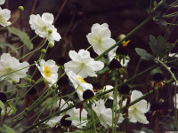 kwiat_694