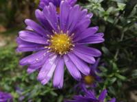 kwiat_695