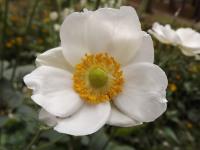 kwiat_697