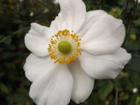 kwiat_698