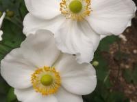 kwiat_699