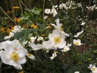 kwiat_700
