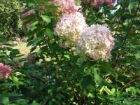 kwiat_703