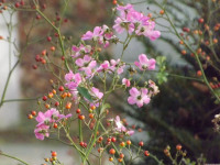 kwiat_705