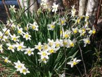 kwiat_708