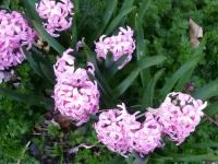 kwiat_710