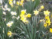 kwiat_714