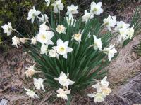 kwiat_716