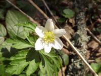 kwiat_721