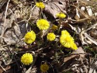 kwiat_724