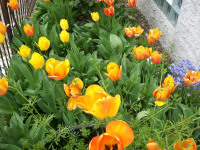 kwiat_734