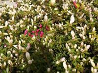 kwiat_736