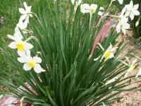 kwiat_740
