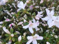 kwiat_741