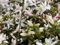 kwiat_743