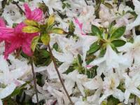 kwiat_745