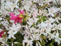 kwiat_746