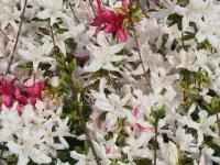 kwiat_749