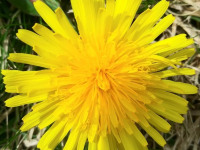 kwiat_750