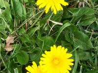 kwiat_751