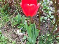 kwiat_752