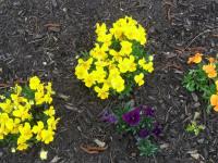 kwiat_753