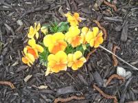 kwiat_754