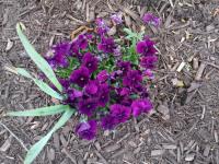 kwiat_756