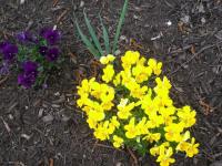 kwiat_757