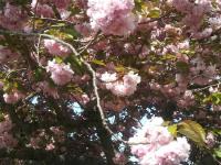 kwiat_758