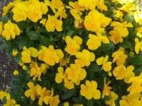 kwiat_759