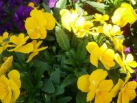 kwiat_760