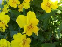 kwiat_761