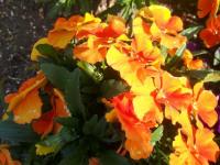 kwiat_762
