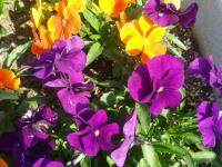 kwiat_763