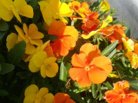 kwiat_764