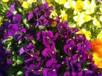 kwiat_765
