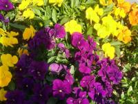 kwiat_766