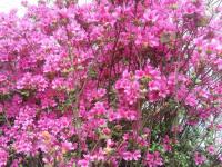 kwiat_768