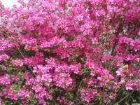 kwiat_769