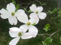 kwiat_771