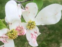 kwiat_772