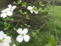 kwiat_773