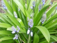 kwiat_774