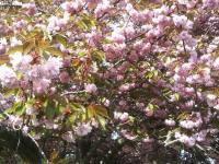 kwiat_775