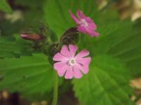 kwiat_865